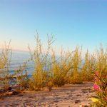 Baikal Tankhoi Coast